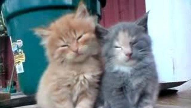 น้องแมวจะหลับแล้ว