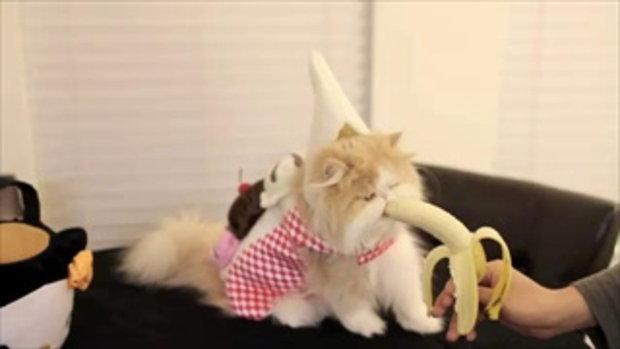 แมวกินกล้วย น่ารัก!!