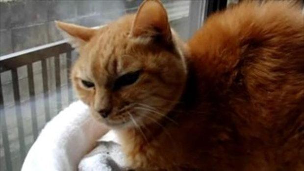 น้องแมว...เหมือนจะง่วง!!