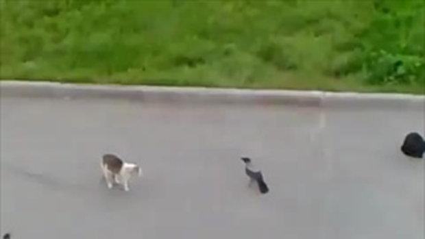 เรื่องนกๆ แมวๆ มันส์ๆ