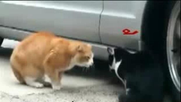 เมื่อแมวด่าแมว ขำๆ
