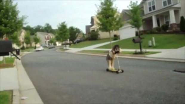 สุนัข เล่น scooter