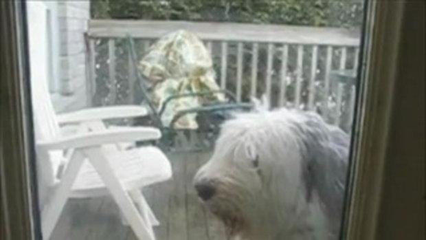 น้องหมาทำความสะอาดกระจก(หรือเปล่า)