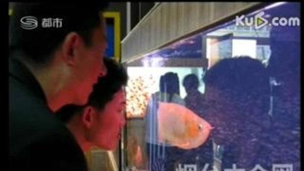 ปลามังกรแดง ราคาแพงเท่ารถบีเอ็ม