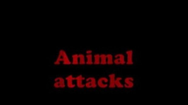 15 คลิป สุดยอดสัตว์ทำร้ายคน จิตอ่อนอย่าดู