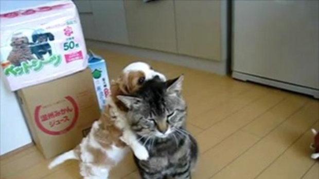 หมา แมว คู่ซี้ต่างพันธุ์ เล่นกันน่ารักจริงๆ