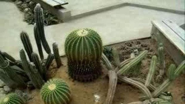 เทื่ยวชมงานแสดงพันธุ์ไม้ดอก ที่สวนหลวง ร 9 ชุด 3