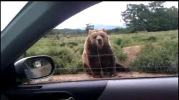 สุดทึ่ง! หมีโบกมือทักทาย นักท่องเที่ยว