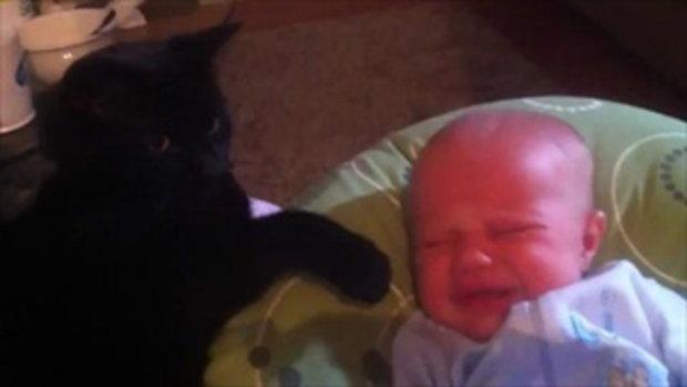แมวกล่อมเด็ก พี่เลี้ยงแสนรู้กับหนูน้อยน่ารัก
