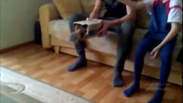 แมวลงกล่อง น้องเหมียวน่ารัก แสนรู้จริงๆ