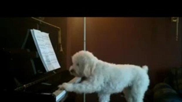 น้องหมาโชว์เดี่ยวเปียโน ร้อง-เล่น เอง