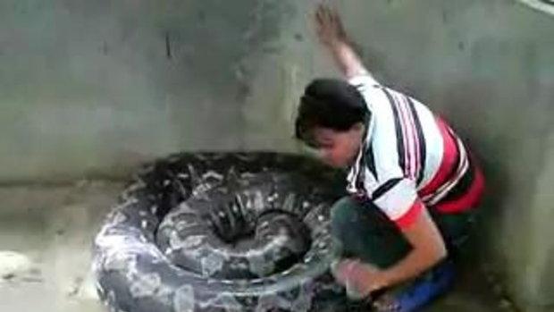 ไม่กลัวงูเลยหรอ!!!