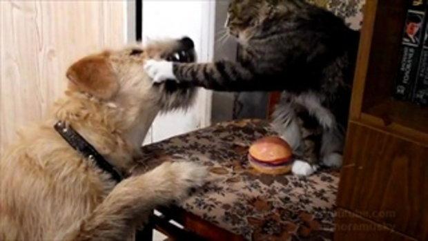 หมา - แมว เปิดศึกชิงชีสเบอร์เกอร์ น่ารักอ่ะ!!