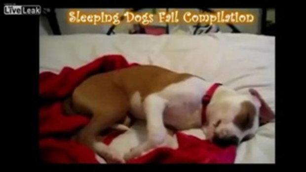 รวมฮิต หมานอนละเมอสุดน่ารัก