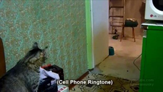 โทรศัพท์มา...รับให้หน่อย!!