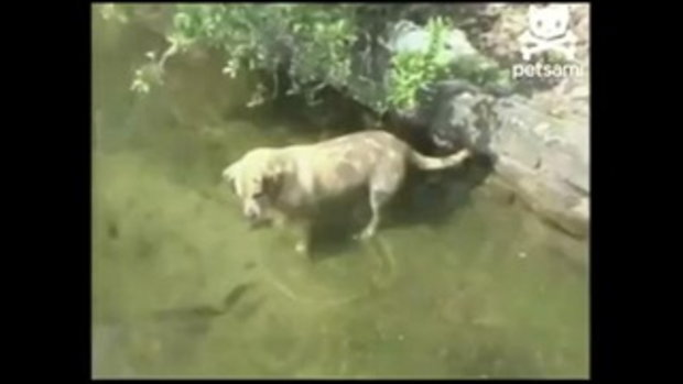 น้องหมา เจ๋งอีกแล้ว จับปลาโชว์