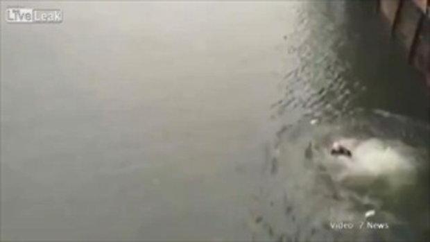 พระเอกตัวจริง ตำรวจกระโดด ลงไปช่วยผู้หญิงที่กำลังจะจมน้ำ