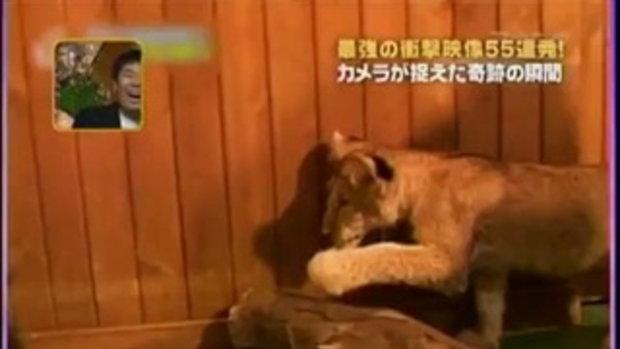 มาดูเจ้าหมีน้อยขี้ตกใจกันค่ะ by sia.co.th