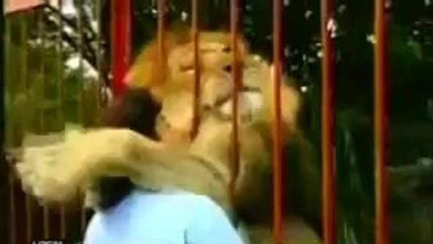 เมื่อสิงโต เจอหญิง ที่เคยช่วยชีวิตมัน จะทำอย่างไร