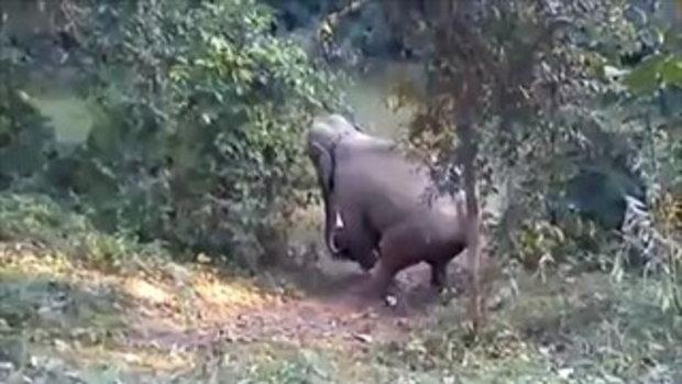 ช.ช้าง ลากรถ