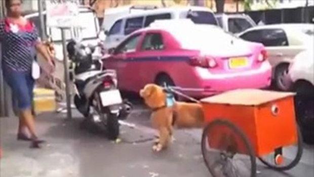 สุนัข..ยังรู้บุญคุณ