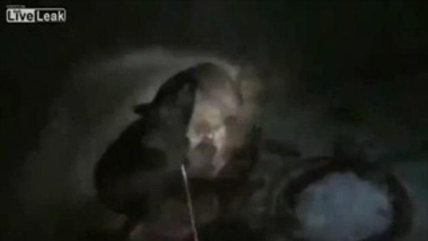 สยอง...หมีดำทำร้ายคนให้อาหารจนตาย