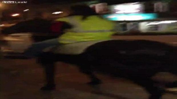 โดนจับ! หญิงนิวซีแลนด์ เมาจัดขโมยเสื้อและม้าตำรวจมาขี่เล่น