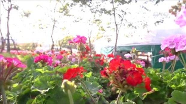 เทยเที่ยวไทย  Flora Park วังน้ำเขียว