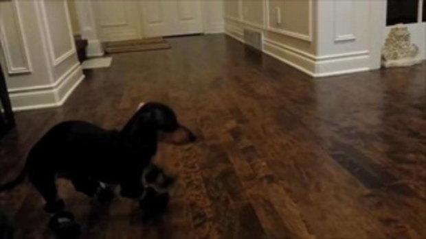 เมื่อหมาใส่รองเท้า ครั้งแรก