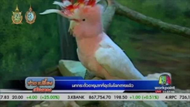 นกกระตั้วอายุมากที่สุดในโลกตายแล้ว | ข่าวเปรี้ยงเที่ยงตรง | 01 ก.ย. 59