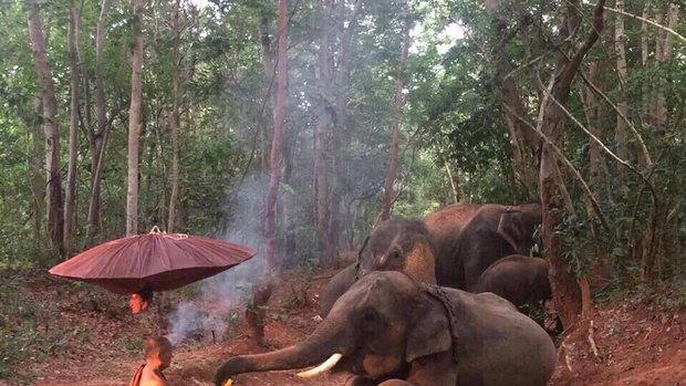 ช้างกราบพระ ภาพดังโซเชียล ยืนยันเป็นของจริง