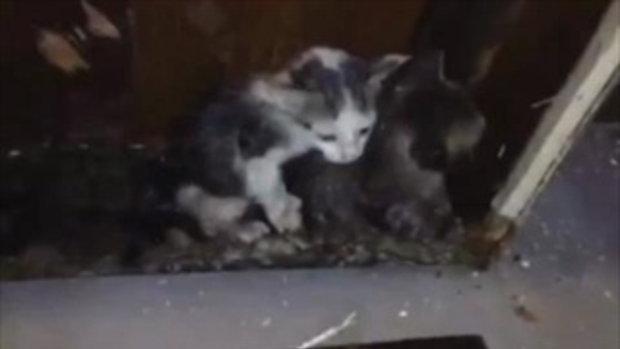 ใจหล่อมาก!!! กิก ดนัย ลงทุนทุบร้านตัวเอง ช่วยชีวิตแมวติดในกำแพง