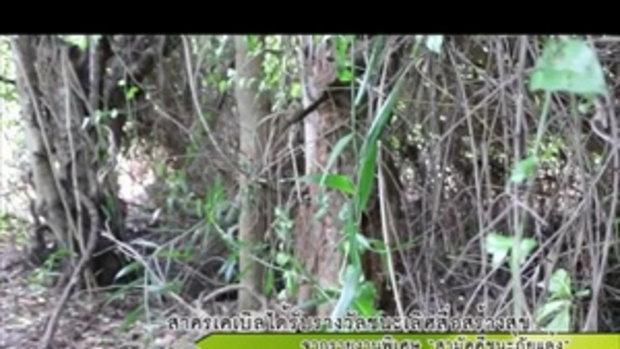 Sakorn News : ชาวบ้านช่วยกันจับจระเข้ยาวกว่า 3 เมตร