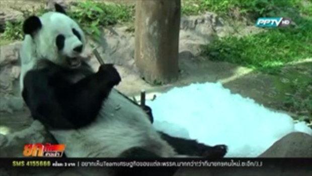 สวนสัตว์เชียงใหม่ให้น้ำแข็งสัตว์คลายร้อน
