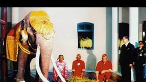 ช้างเผือก พระเศวตอดุลยเดชพาหนฯ