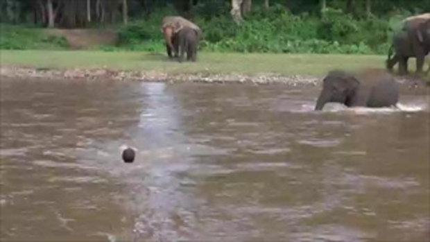 คลิปลูกช้าง เดินลงแม่น้ำช่วยชีวิตมนุษย์ เพราะเข้าใจว่าจมน้ำ