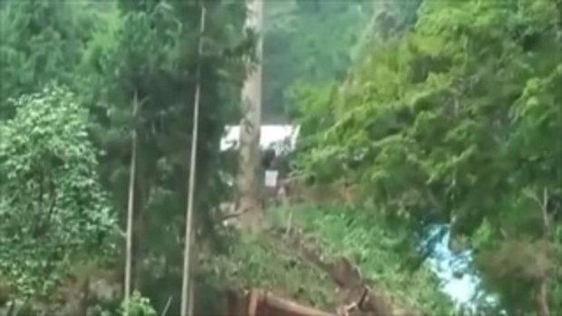 ตัดต้นไม้ใหญ่บนที่สูง ผลคือ...