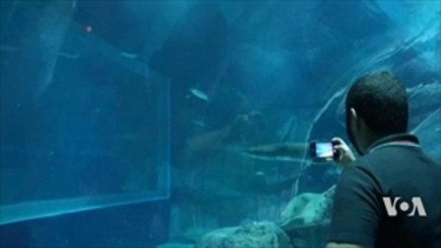 'ว่ายน้ำกับฉลามและจระเข้' !! บริการท่องเที่ยวแนวใหม่ถูกใจคนชอบความตื่นเต้น