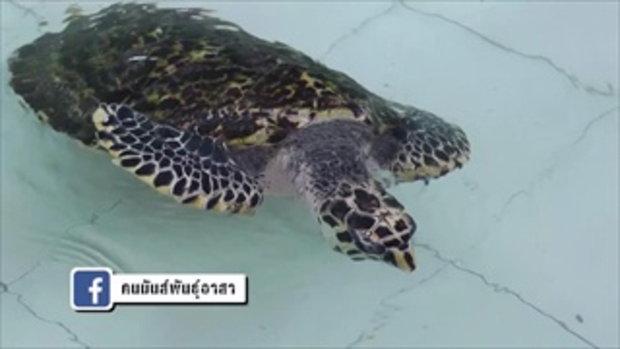 คนมันส์พันธุ์อาสา : ภารกิจฟื้นฟูอนุรักษ์พันธุ์เต่าทะเล ช่วงที่ 4/4 (21 เม.ย.60)