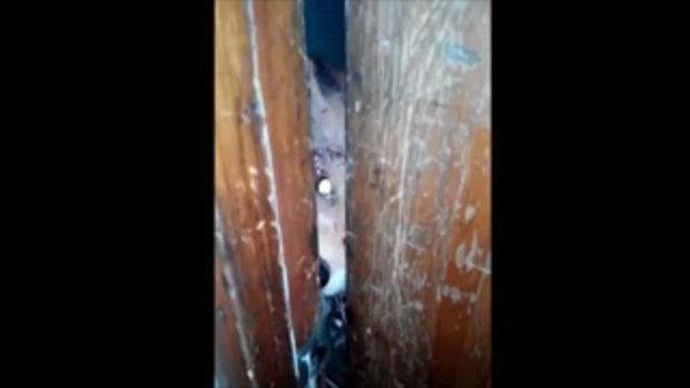ชาวโลกแห่ดู หมาป่าซอมบี้ กัดแทะประตูสุดหิวกระหาย