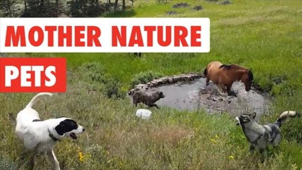 รวมภาพสัตว์น่าขันเมื่อพวกมันได้อยู่กับธรรมชาติ