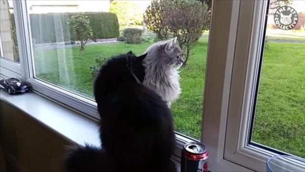 รวมคลิปวีดีโอเหล่าแมวตัวร้าย ถึงไม่น่ารักแต่ก็น่าขัน