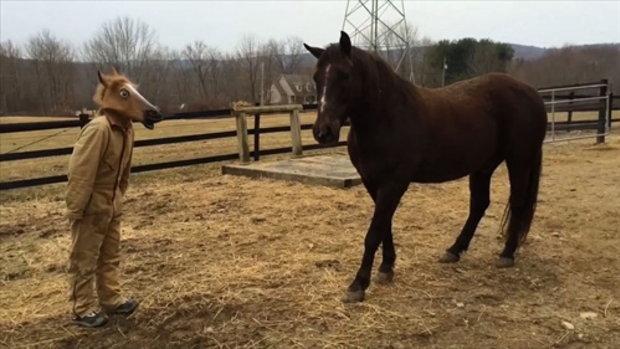 จะเป็นอย่างไรเมื่อม้าต้องมาเจอเข้ากับหน้ากากม้า