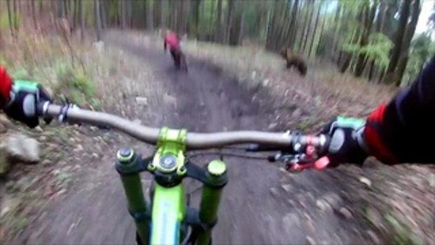 นาทีระทึก!!! ปั่นจักรยานอยู่ดีๆ เจอหมีตัวใหญ่ วิ่งไล่กลางป่าสุดท้ายเป็นไงมาดูกัน