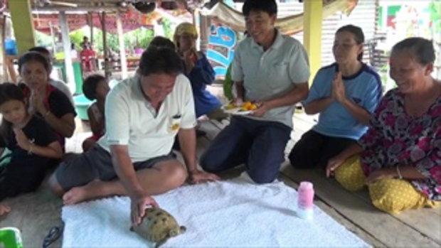 ชาวบ้านฮือฮา! พบเต่าประหลาด กระดองสีทอง ลายคล้ายฐานพระสมเด็จ