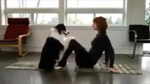 ชาวเน็ตแห่แชร์ ! สุนัขแสนรู้ ฉลาดมาก ทำท่าออกกำลังกาย มนุษย์ยังอาย (ชมคลิป)