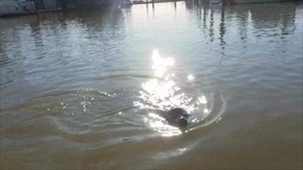 ขวัญกระเจิง! คลิปสุดระทึกเมื่อแมวน้ำโผล่พ้นน้ำ ดึงเด็กหญิงตกสะพานปลา