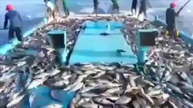 โอ้โห่! มันเยอะมาก...ชาวประมงตกปลา