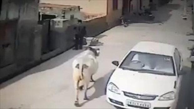 อุทาหรณ์! มัวแต่คุยโทรศัพท์ ถูกชนอัดกำแพง...ไปหมันเขี้ยวใครมาเจ้าวัว!