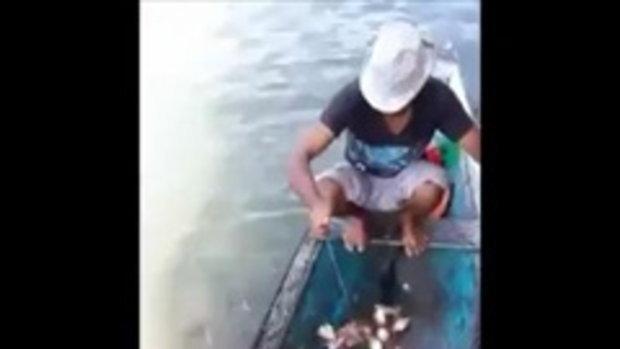 มาดู! วิธีตกปลาปิรันย่า แบบง่ายๆ
